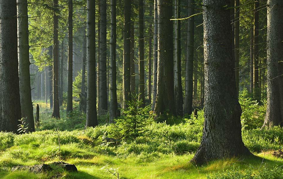 KVH aus Fichtenholz | HolzLand Stoellger in Langenhagen