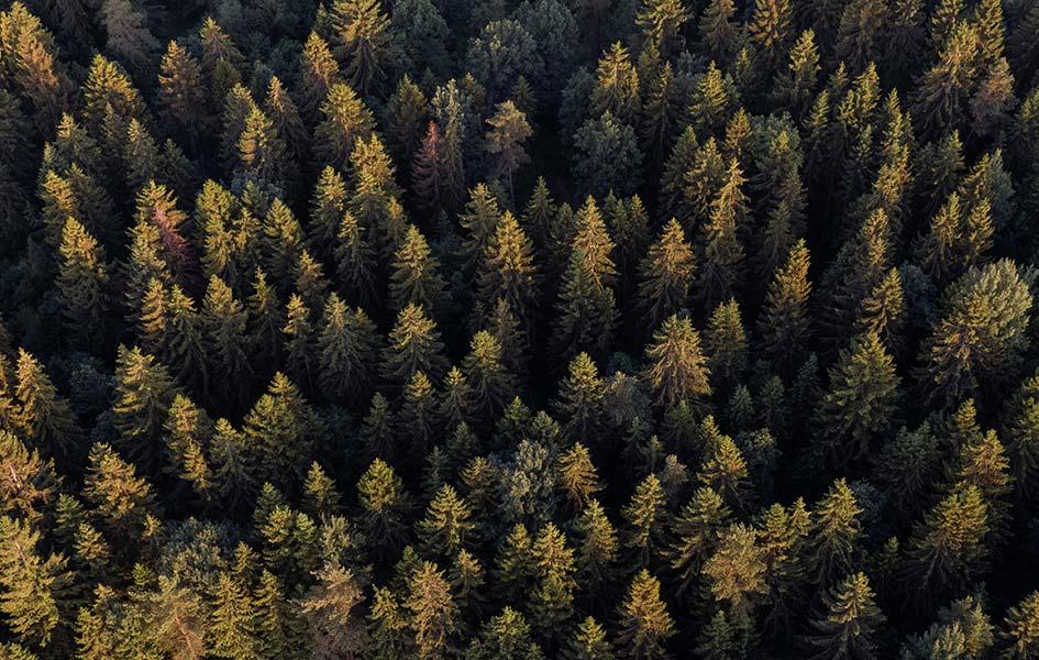 Sperrholz aus Laub- und Nadelholz | HolzLand Stoellger in Langenhagen